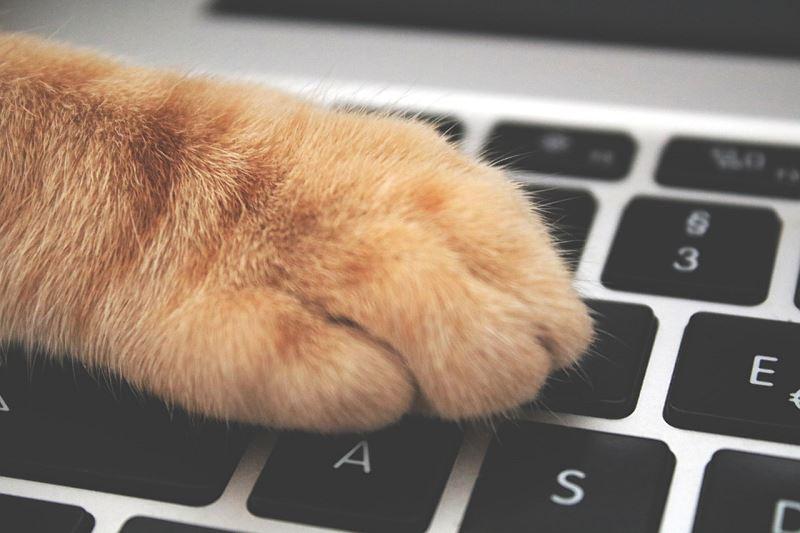 Kot na klawiaturze