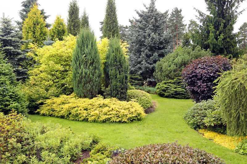 Zielony ogród pełen krzewów
