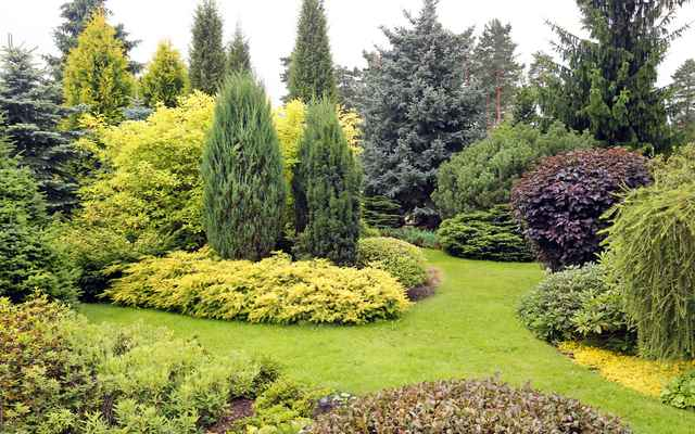 Najlepsze krzewy ozdobne do Twojego ogrodu