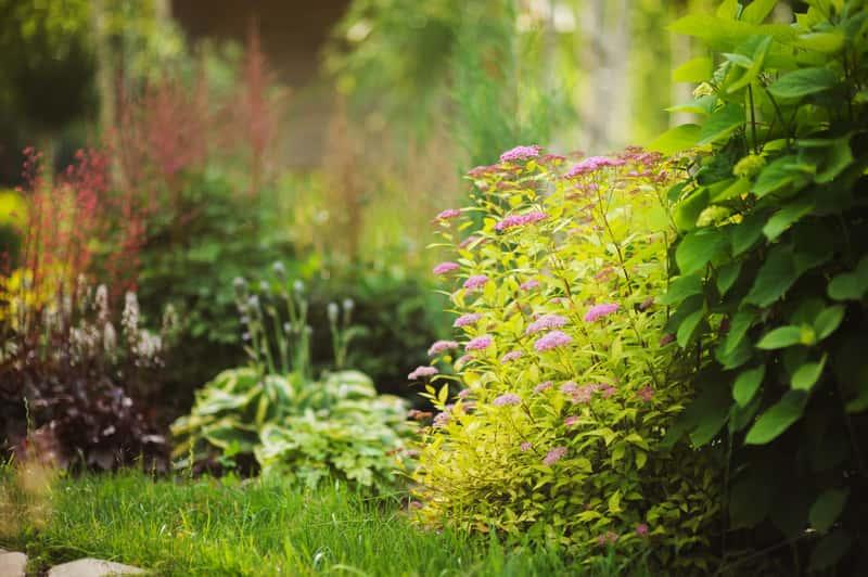 Kwiaty cieniolubne do ogrodu - popularne odmiany idealne na rabaty