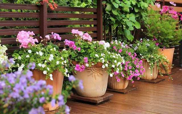 Które kwiaty na taras sprawdzą się najlepiej?