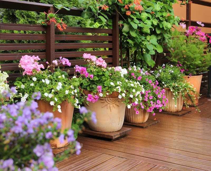 Piękne kwiaty w donicach na tarasie