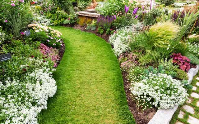 Byliny ogrodowe wieloletnie - przegląd najpopularniejszych roślin