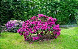 30 najpiękniejszych krzewów ozdobnych do ogrodu