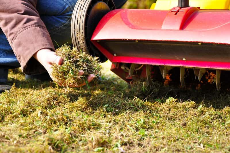 Usuwanie mchu z trawnika