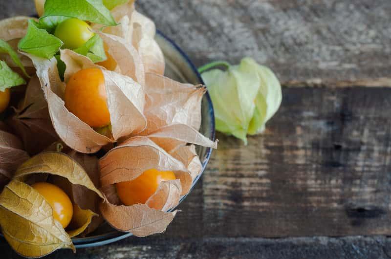 Miechunka peruwiańska – odmiany, sadzenie, uprawa, pielęgnacja, właściwości