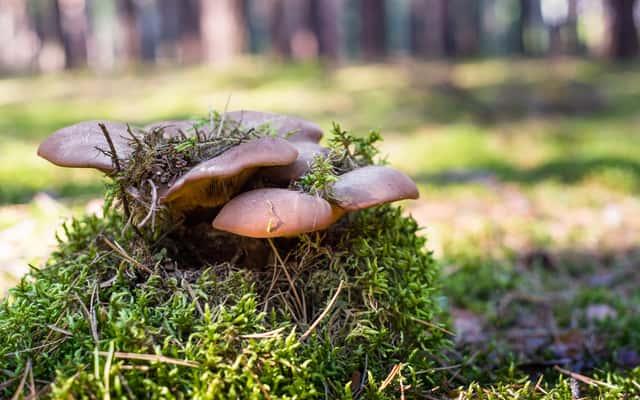 Mikoryza i jej zastosowanie w ogrodzie - poradnik praktyczny