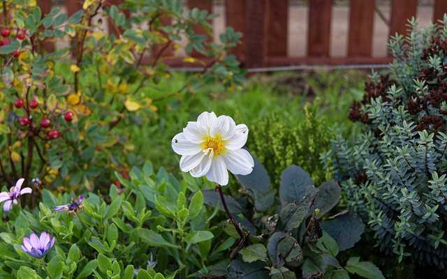 Murki oporowe w ogrodzie - charakterystyka, zastosowanie, materiały do budowy