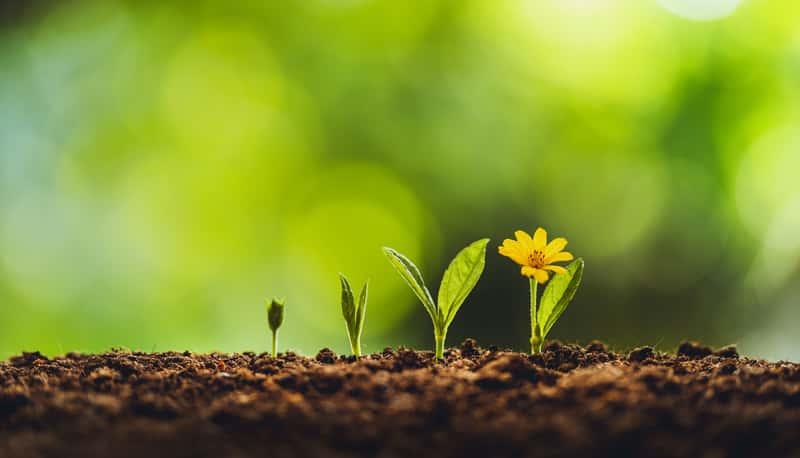 Które nasiona kwiatów wybrać? Rodzaje nasion, ceny, opinie, porady