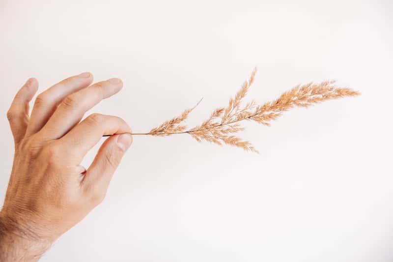 Nasiona traw ozdobnych - popularne gatunki, opinie, polecane sklepy