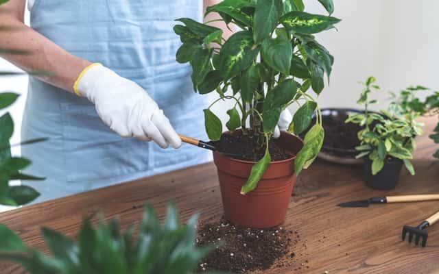 Nawóz do kwiatów doniczkowych - polecane preparaty, dawkowanie, porady