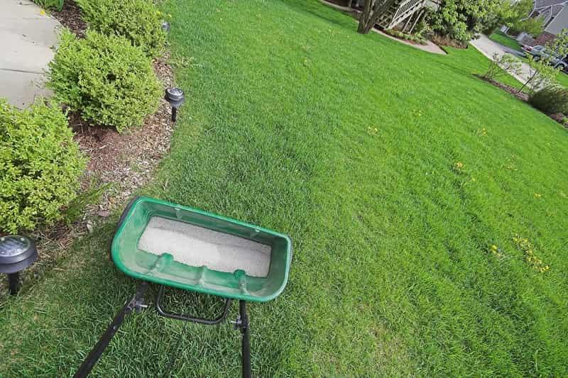 Nawóz do trawy rozsiewany specjalnym urządzeniem, by przeprowadzić nawożenie wiosną lub jesienią