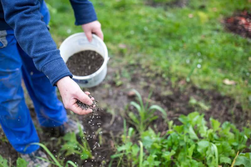 Nawozy sztuczne do ogrodu - rodzaje, ceny, najskuteczniejsze środki do różnych zastosowań