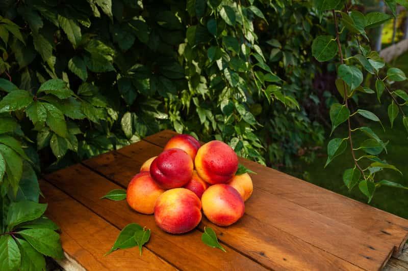 Nektarynka - uprawa w ogrodzie, odmiany, choroby