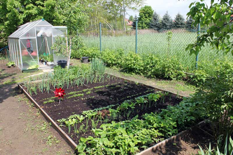 Nowalijki wiosenne w ogrodzie