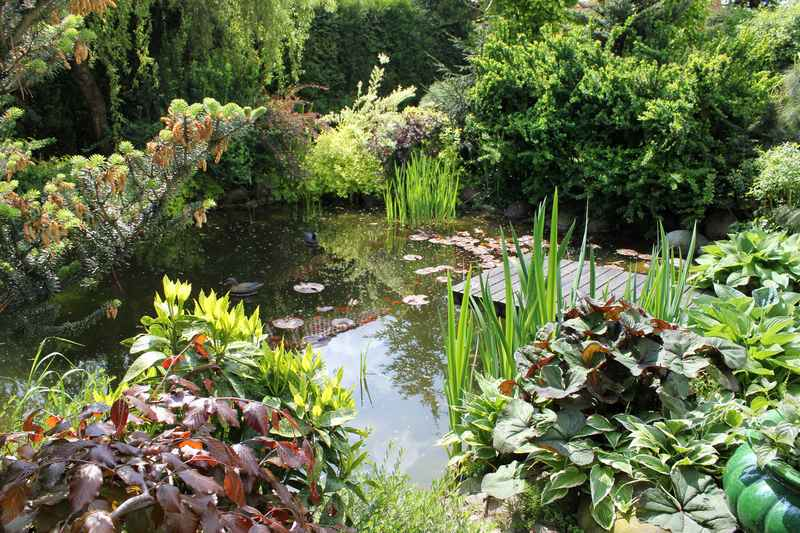 Ogród zaaranżowany z oczkiem wodnym