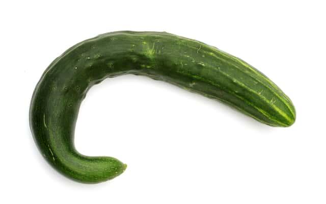 Ogórek wężowy – opis, sadzenie, pielęgnacja, zbiór, porady