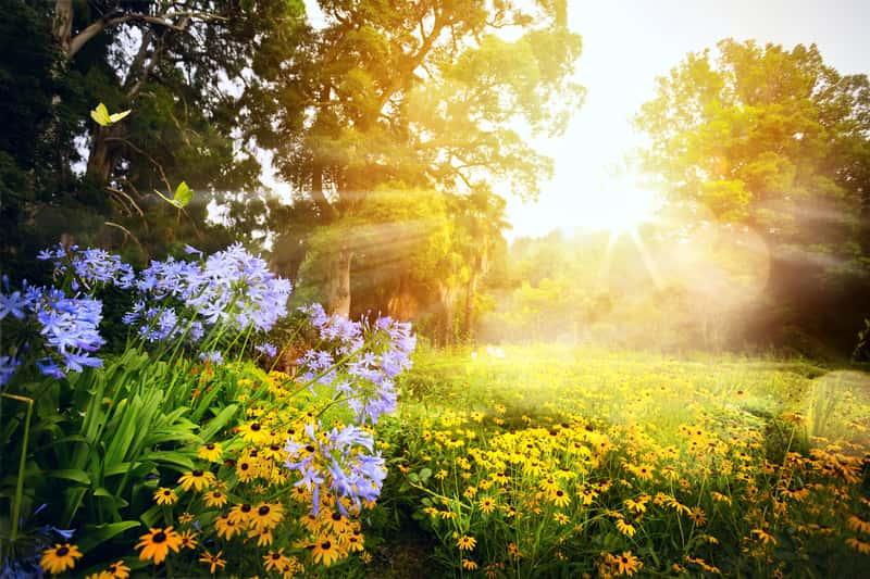 Pięknie oświetlony ogród