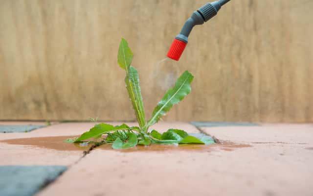 Oprysk na chwasty w ogrodzie - polecane preparaty chwastobójcze