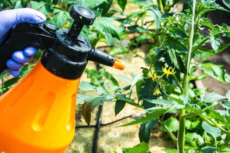 Opryskiwacz ręczny w ogrodzie