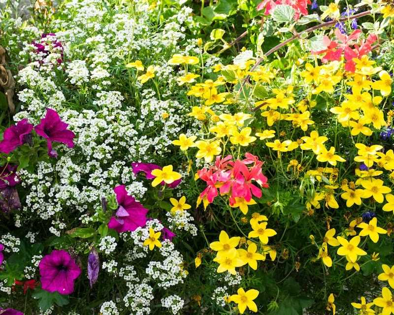 Piękne kwiaty w okresie kwitnienia
