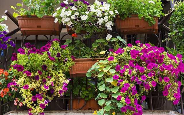 Kiedy sadzić kwiaty na balkon