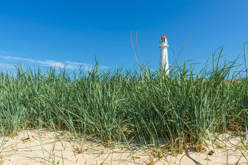 Turzyca piaskowa (carex arenaria) - opis, właściwości królowej polskich wydm