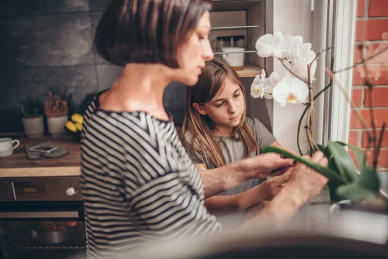 Pielęgnacja storczyka po przekwitnięciu - porady praktyczne