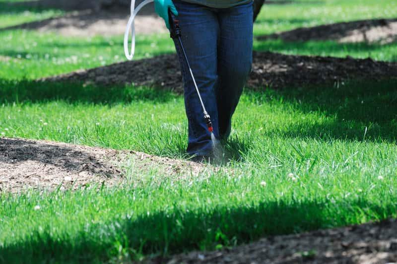 Mężczyzna podczas pracy przy pielęgnacji trawnika
