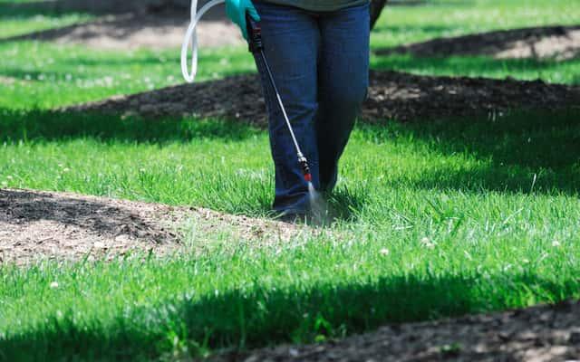 Mało uciążliwa pielęgnacja trawnika - sprawdzone sposoby
