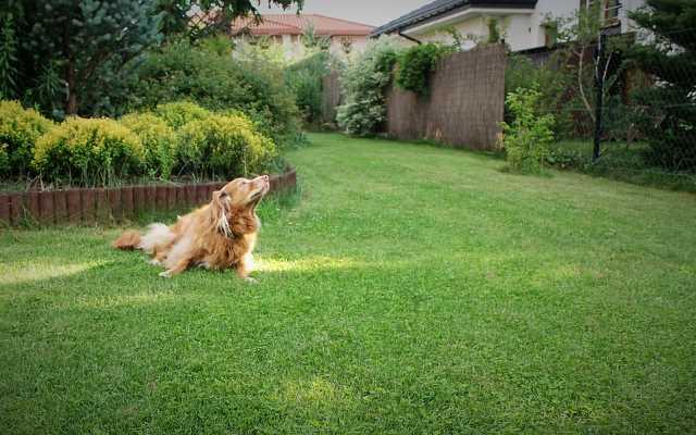 Pies w ogrodzie - w jaki sposób chronić rośliny?