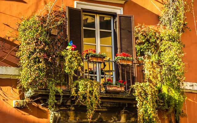 Pnącza na balkon - popularne odmiany, uprawa, pielęgnacja, porady