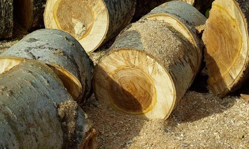 Ścięty pień drzewa