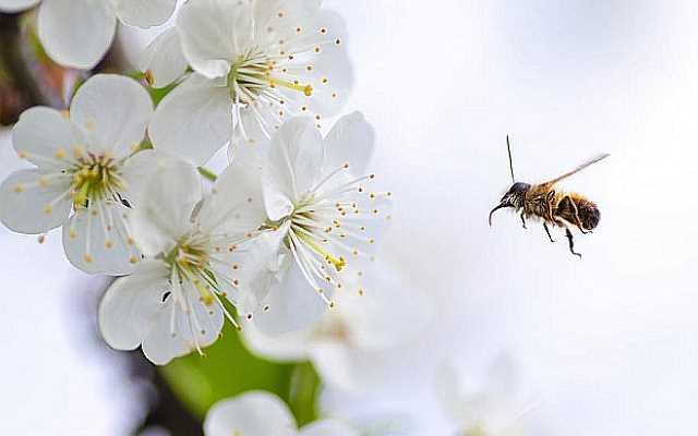 Zioła po angielsku które pomagają pszczołom