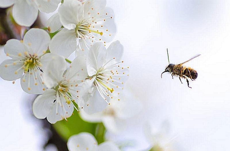 Pomagamy pszczołom