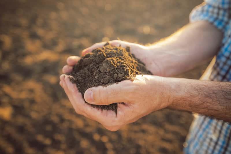 Garść brązowej gleby w dłoniach