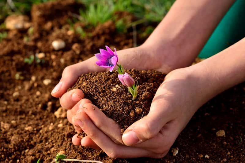 5 największych zagrożeń dla roślin w okresie między zimą a wiosną
