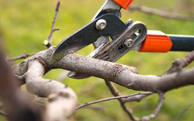 Przycinanie drzew owocowych krok po kroku - jak i kiedy ciąć drzewka owocowe?