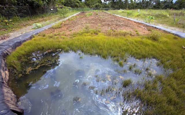 Rekultywacja gleby krok po kroku - co to jest i jakie są najlepsze metody