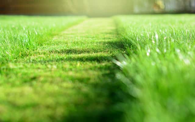 Najlepsze gatunki i rodzaje traw do ogrodu – co wybrać?
