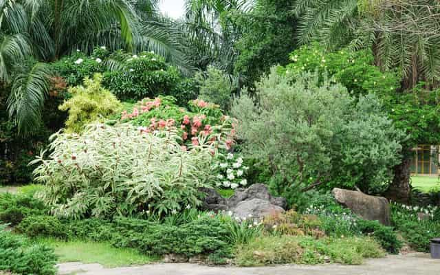 Wybieramy rośliny cieniolubne do ogrodu - popularne gatunki dla każdego