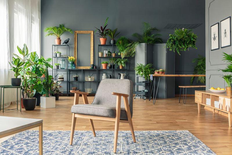 Rośliny w doniczkach w mieszkaniu