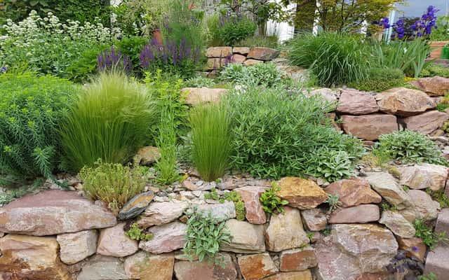 Rośliny na skalniak - 10 roślin najlepszych na skalniaki ogrodowe