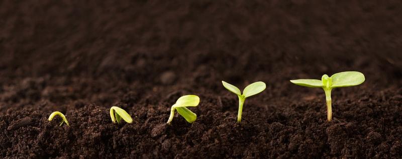 Młode sadzonki roślin w ziemi