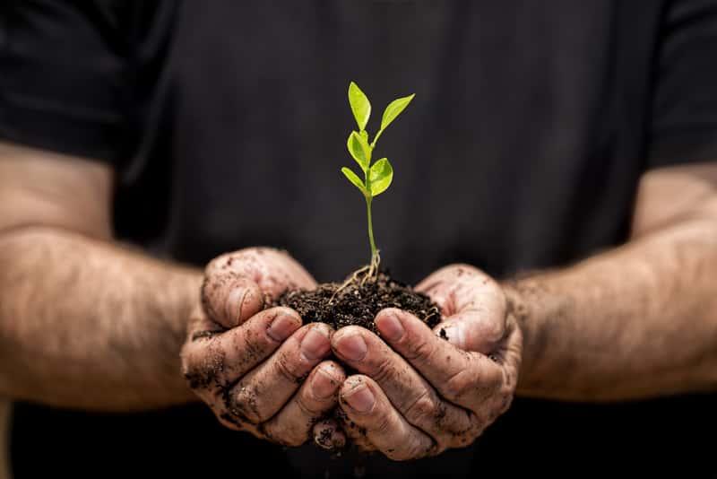 Sadzonka rośliny w dłoniach z ziemią