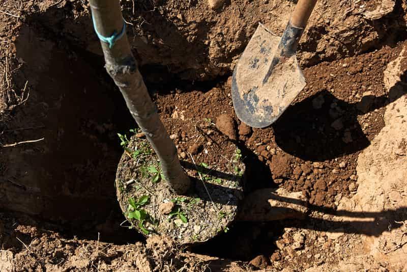Sadzenie drzew krok po kroku - praktyczne porady, terminy, ciekawostki