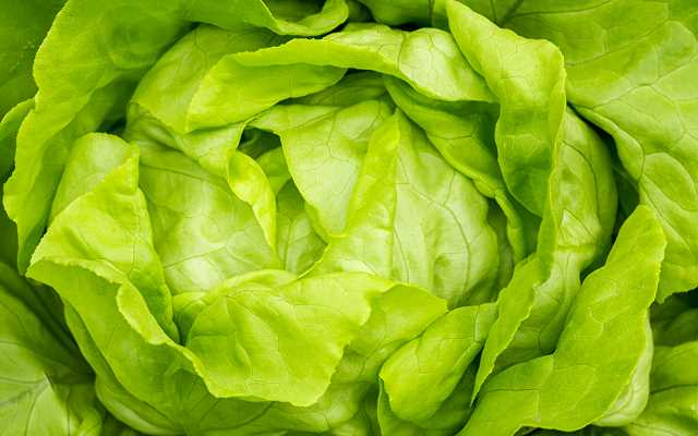 Uprawa sałaty masłowej w gruncie krok po kroku - jak zasadzić ją w swoim ogrodzie?