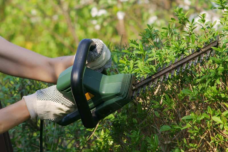 Sekator ogrodowy – rodzaje, ceny, polecane marki i modele