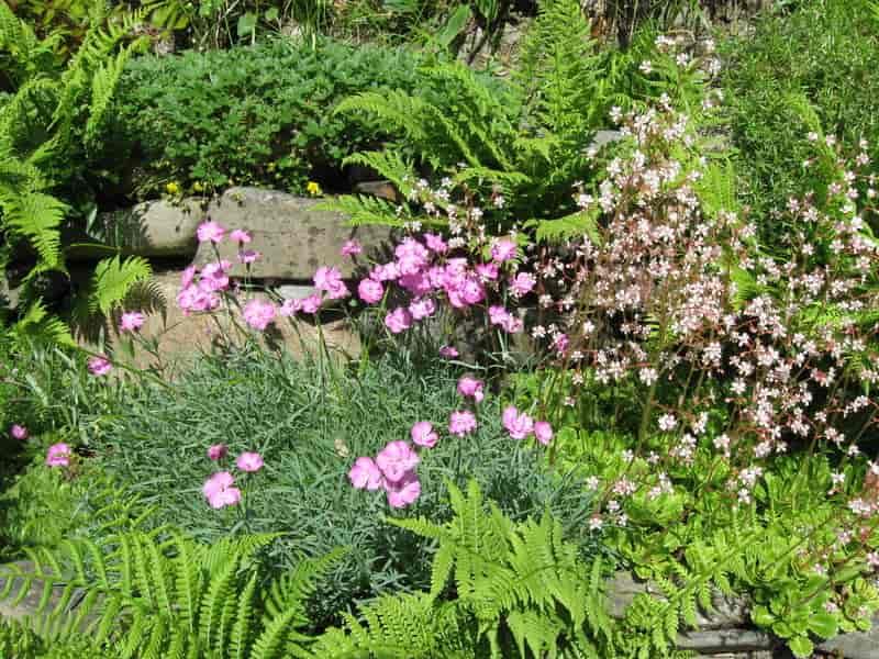 Piekny skalniak ogrodowy