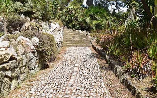 Skalniaki ogrodowe – jakie rośliny na skalniak wybrać?